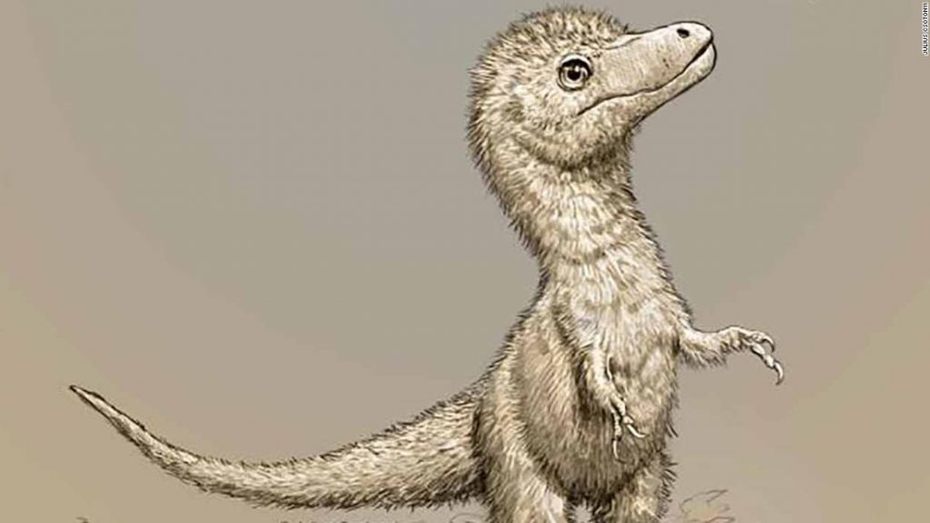 Baby tyrannosaurs were 'size of Border Collie dog' when taking first steps
